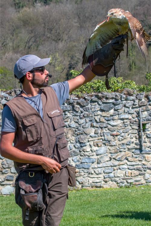 Fauconniers Donjon des Aigles